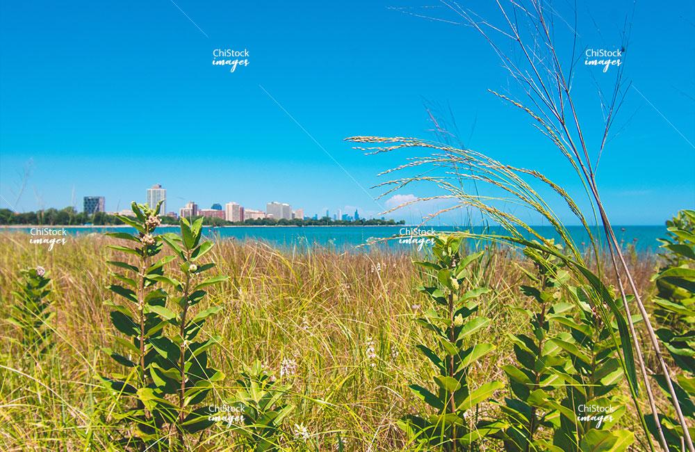 Jackson Park 63rd Street Beach Nature Area