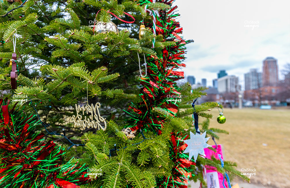 Christmas Tree at the Cotton Tail Park Near South Side Chicago
