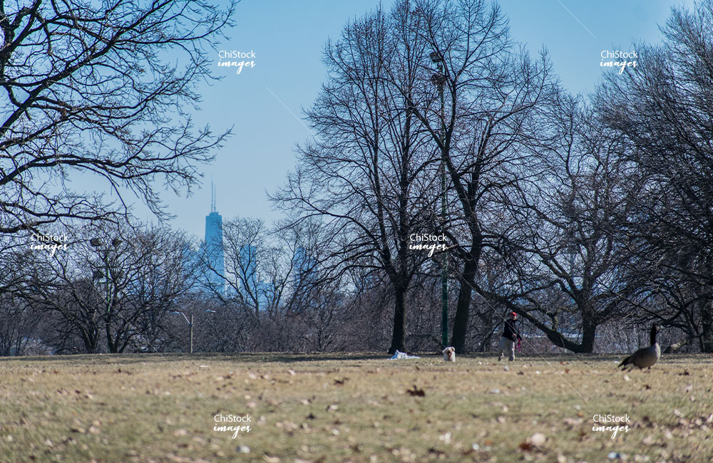 Riis Park Belmont Cragin With Chicago Skyline