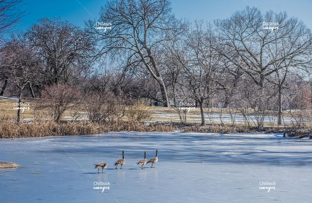 Frozen Pond in Riis Park Belmont Cragin Chicago